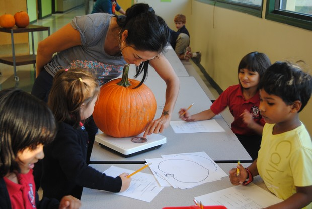 Fulton Science academy learning math with pumpkins